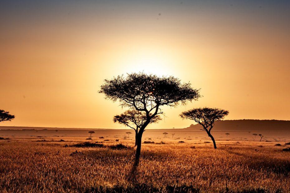 Quand partir au Kenya ?